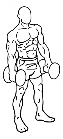 shoulder shrugs  ceaseless fitness